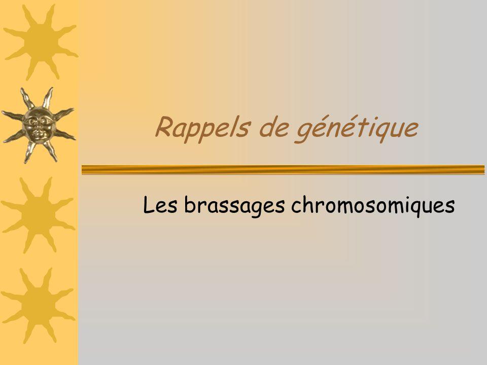 Les brassages chromosomiques