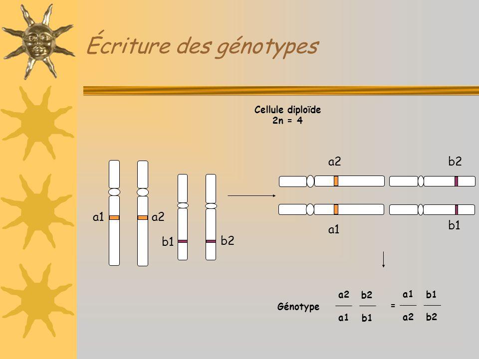 Écriture des génotypes