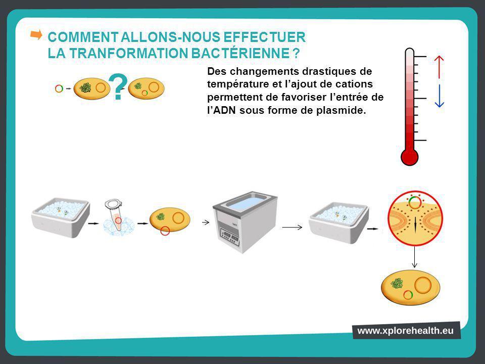COMMENT ALLONS-NOUS EFFECTUER LA TRANFORMATION BACTÉRIENNE