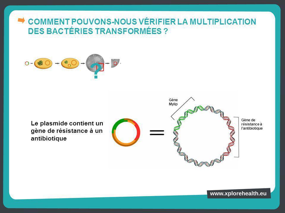 COMMENT POUVONS-NOUS VÉRIFIER LA MULTIPLICATION DES BACTÉRIES TRANSFORMÉES