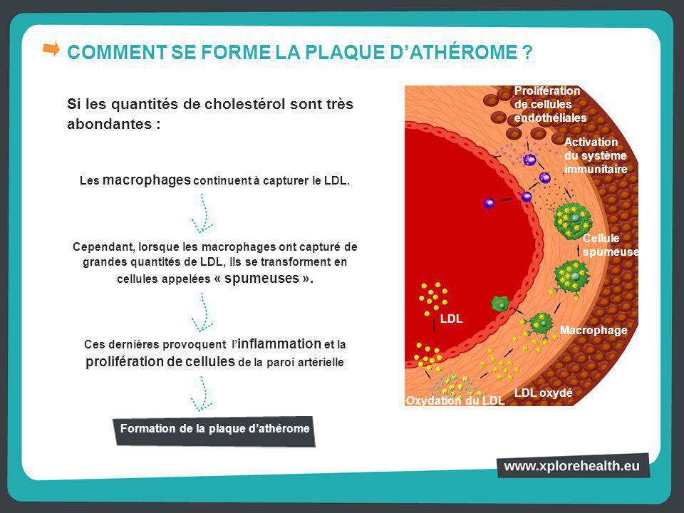 COMMENT SE FORME LA PLAQUE D'ATHÉROME