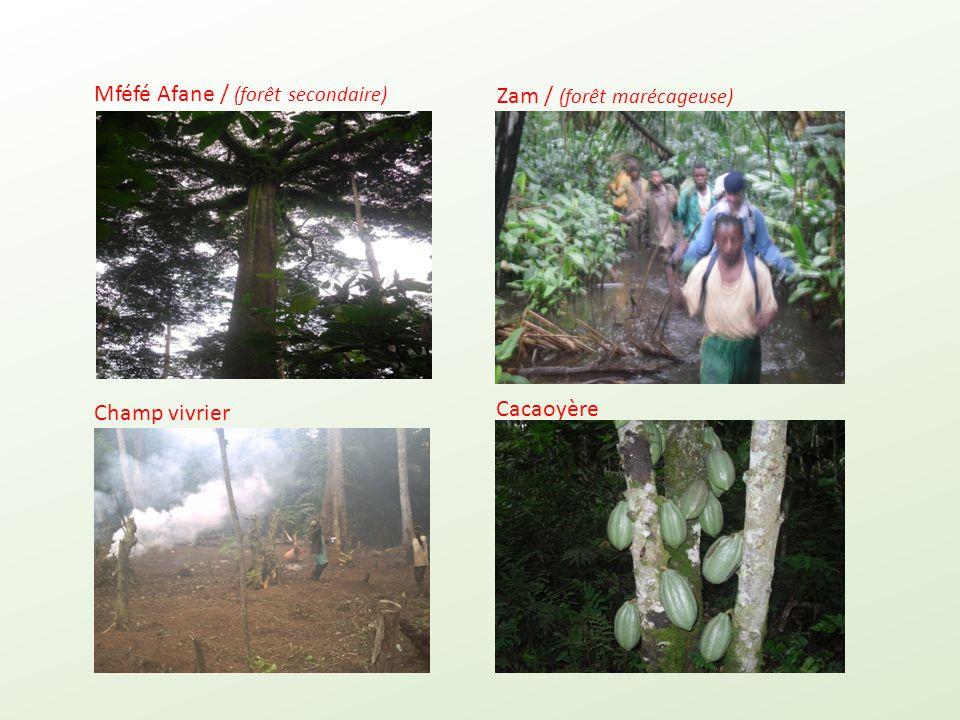 Mféfé Afane / (forêt secondaire)