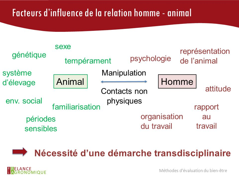 Facteurs d'influence de la relation homme - animal