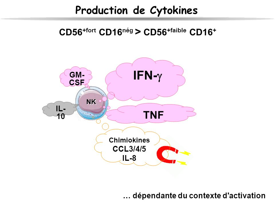 IFN- Production de Cytokines TNF