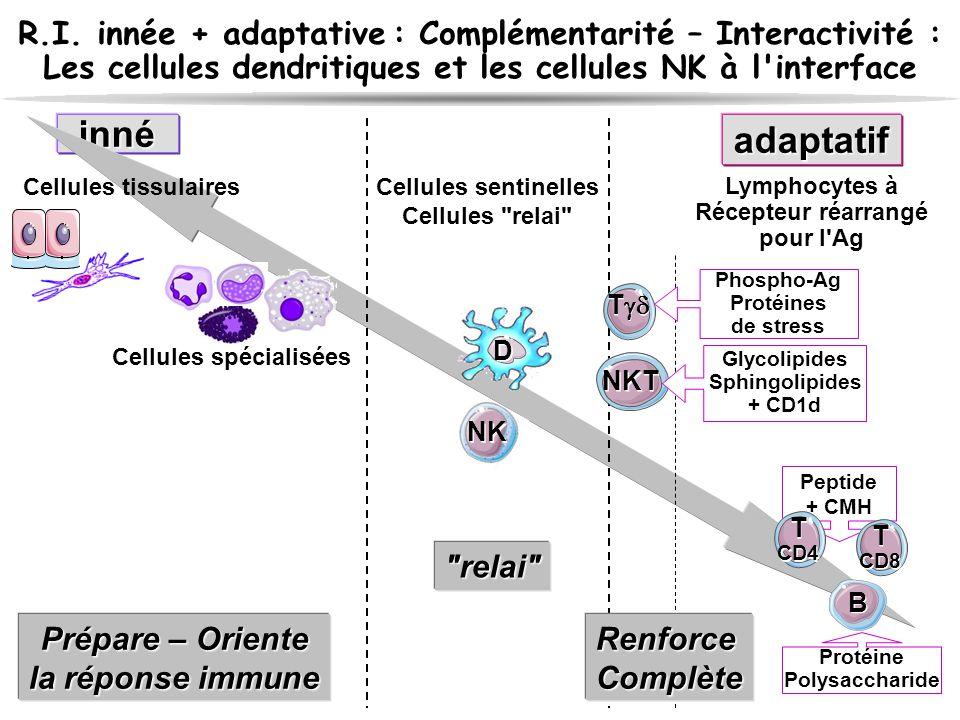 R.I. innée + adaptative : Complémentarité – Interactivité :