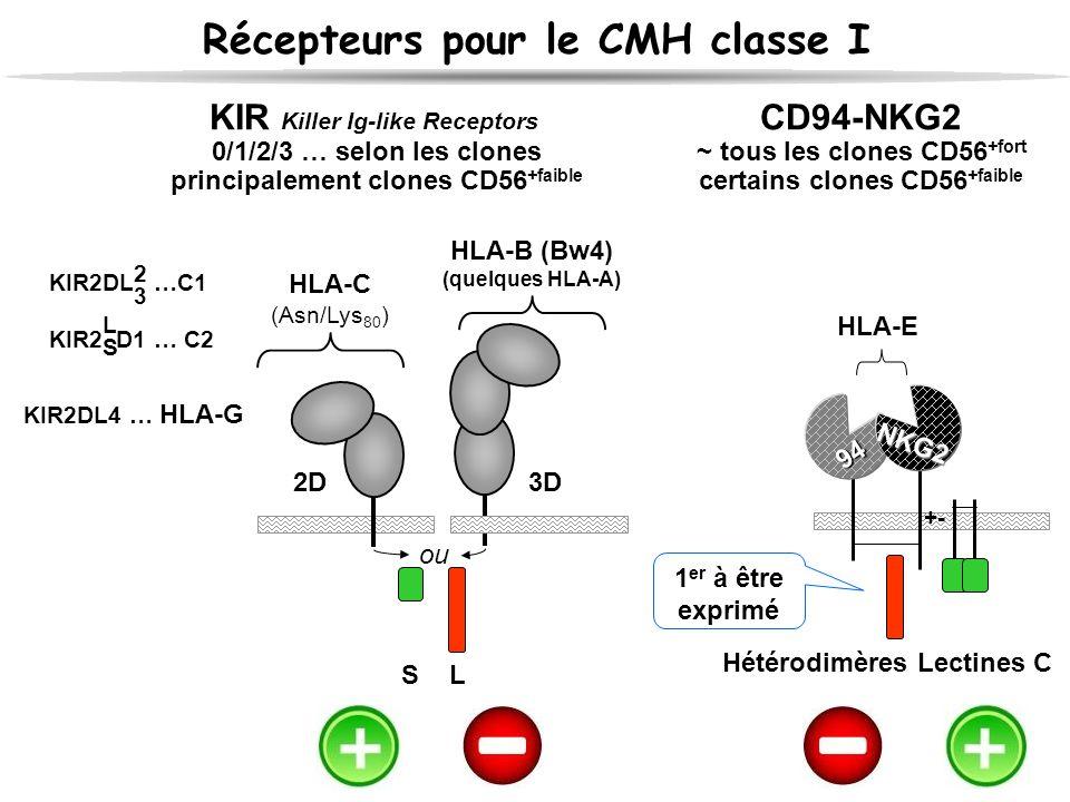 Récepteurs pour le CMH classe I