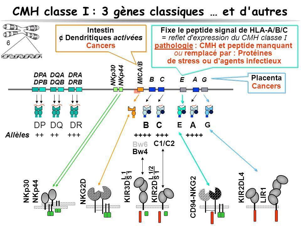 CMH classe I : 3 gènes classiques … et d autres