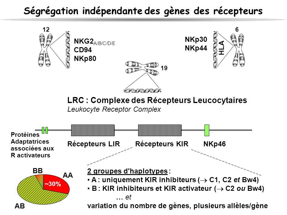 Ségrégation indépendante des gènes des récepteurs