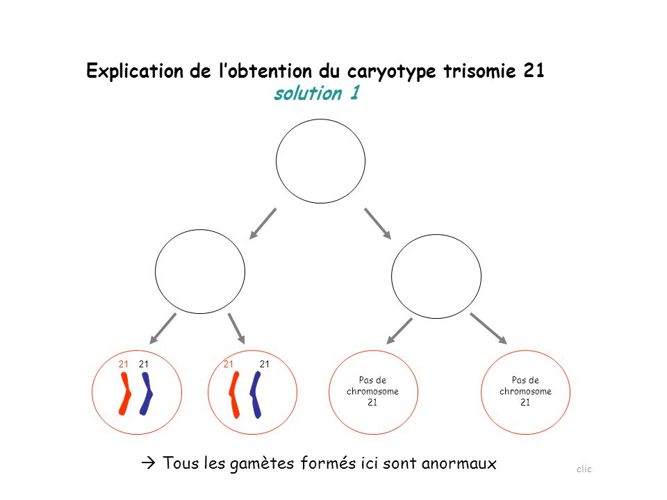 Explication de l'obtention du caryotype trisomie 21 solution 1