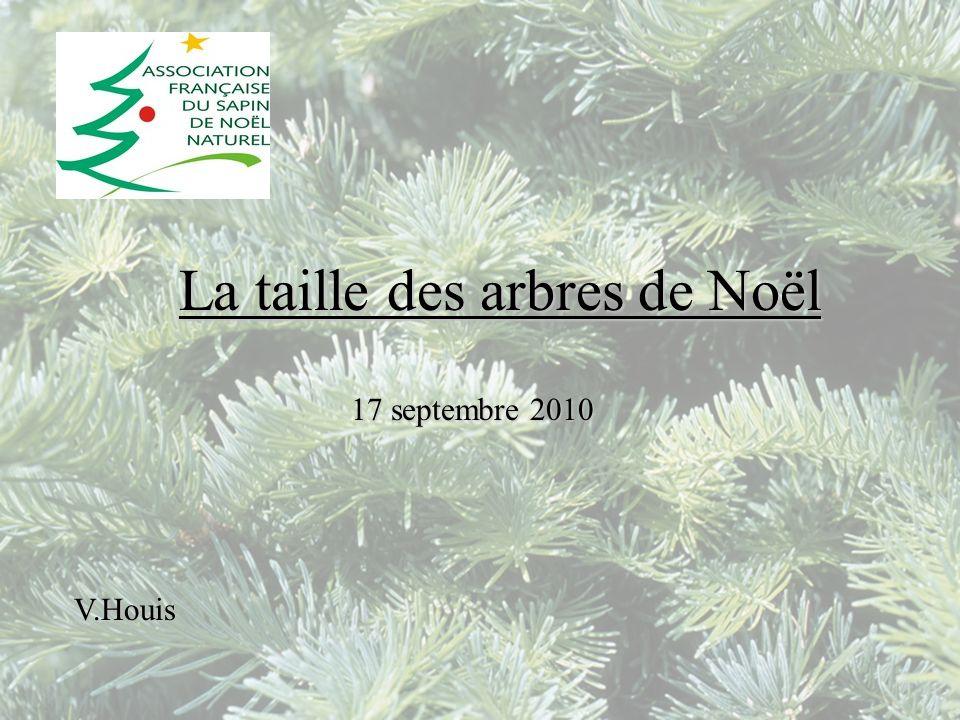 La taille des arbres de Noël