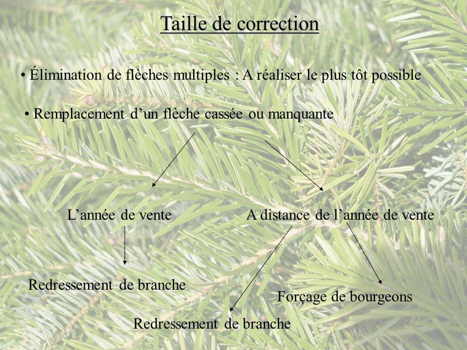 Taille de correction Élimination de flèches multiples : A réaliser le plus tôt possible. Remplacement d'un flèche cassée ou manquante.