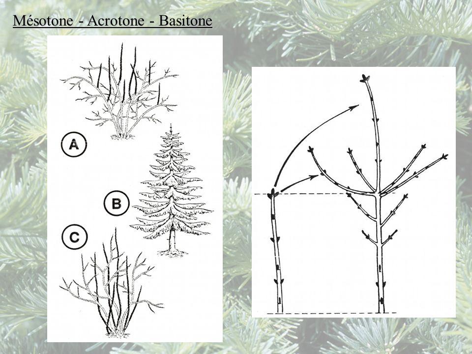 Mésotone - Acrotone - Basitone