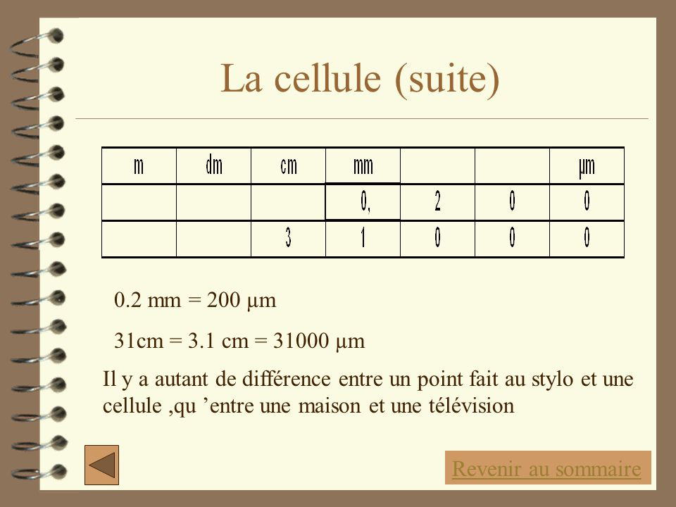 La cellule (suite) 0.2 mm = 200 µm 31cm = 3.1 cm = 31000 µm