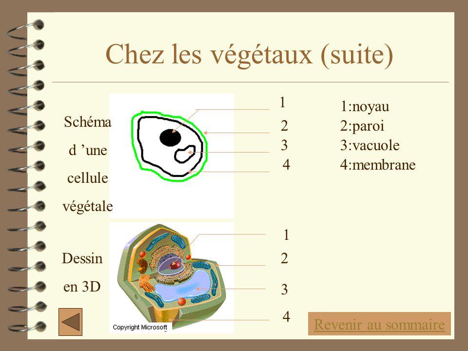 Chez les végétaux (suite)