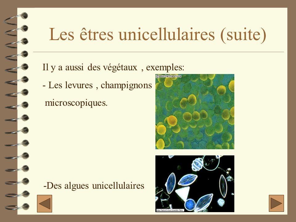 Les êtres unicellulaires (suite)