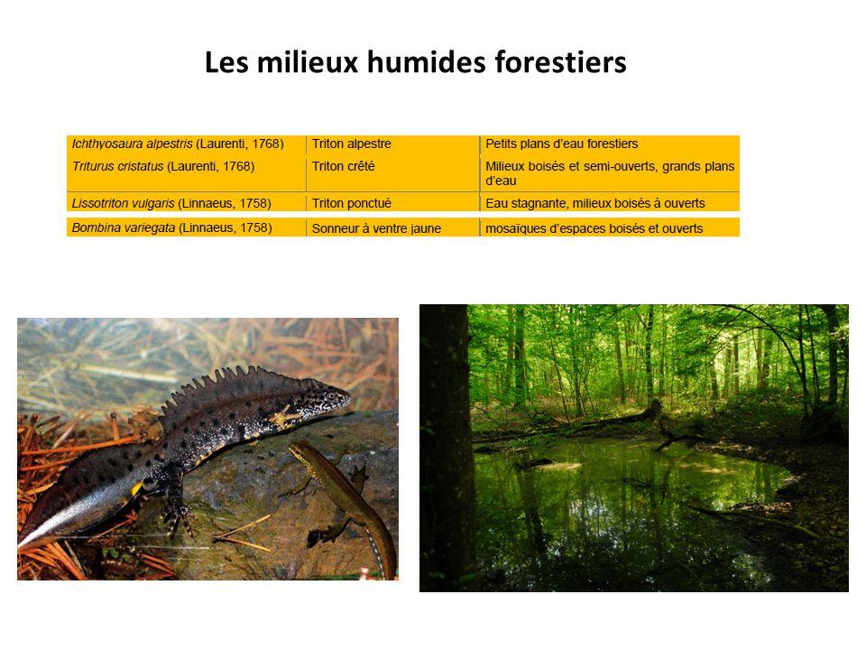 Les milieux humides forestiers