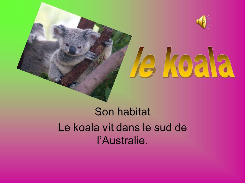 Son habitat Le koala vit dans le sud de l'Australie.
