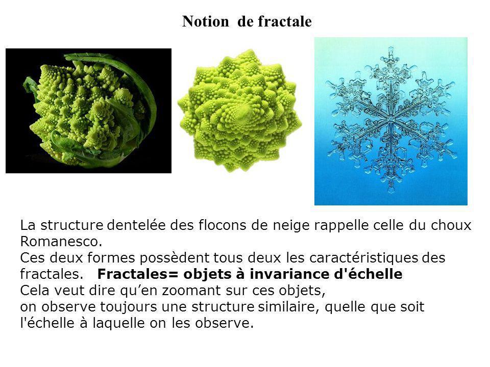 Notion de fractale La structure dentelée des flocons de neige rappelle celle du choux Romanesco.