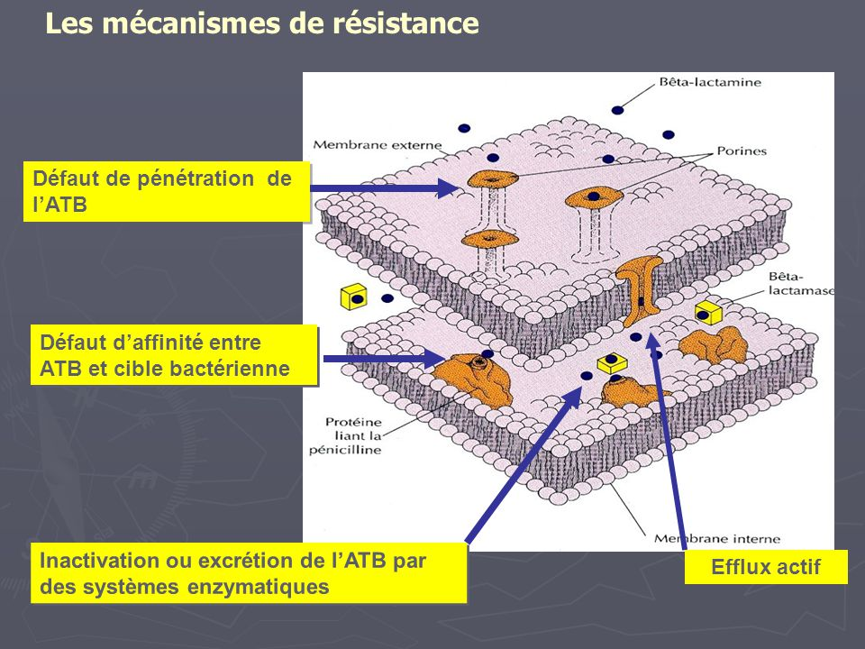Les mécanismes de résistance