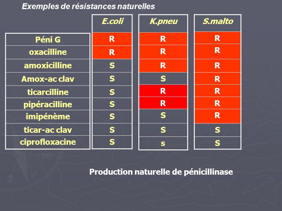 Production naturelle de pénicillinase