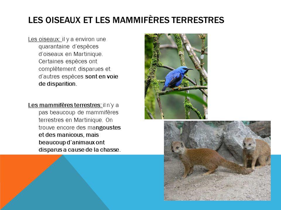 Les oiseaux et les mammifères terrestres