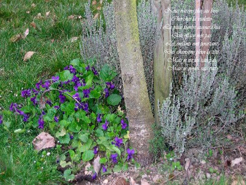 Nous n irons plus au bois Chercher la violette