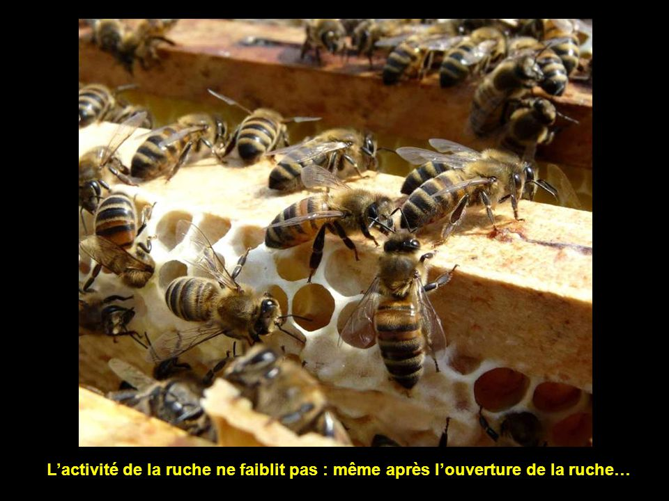 L'activité de la ruche ne faiblit pas : même après l'ouverture de la ruche…