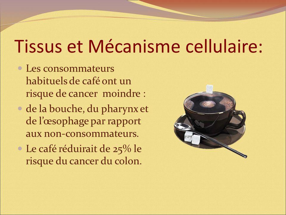 Tissus et Mécanisme cellulaire: