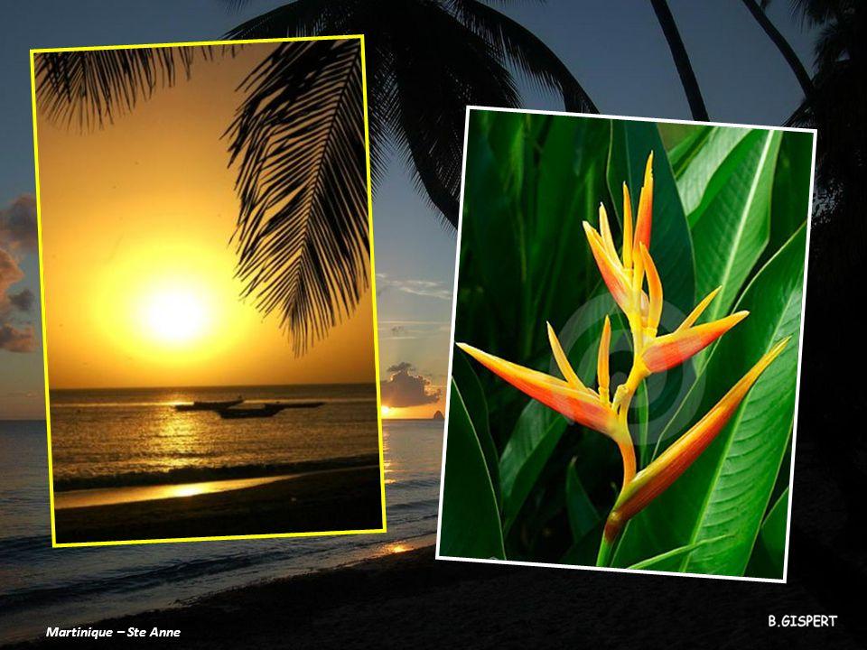 Martinique – Ste Anne