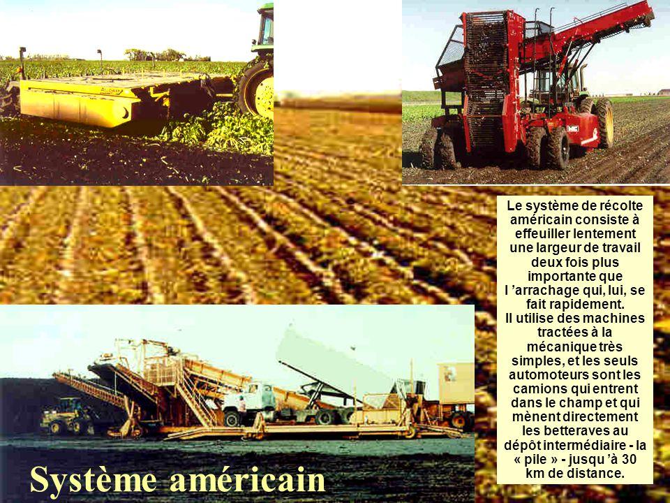 Le système de récolte américain consiste à effeuiller lentement une largeur de travail deux fois plus importante que l 'arrachage qui, lui, se fait rapidement.
