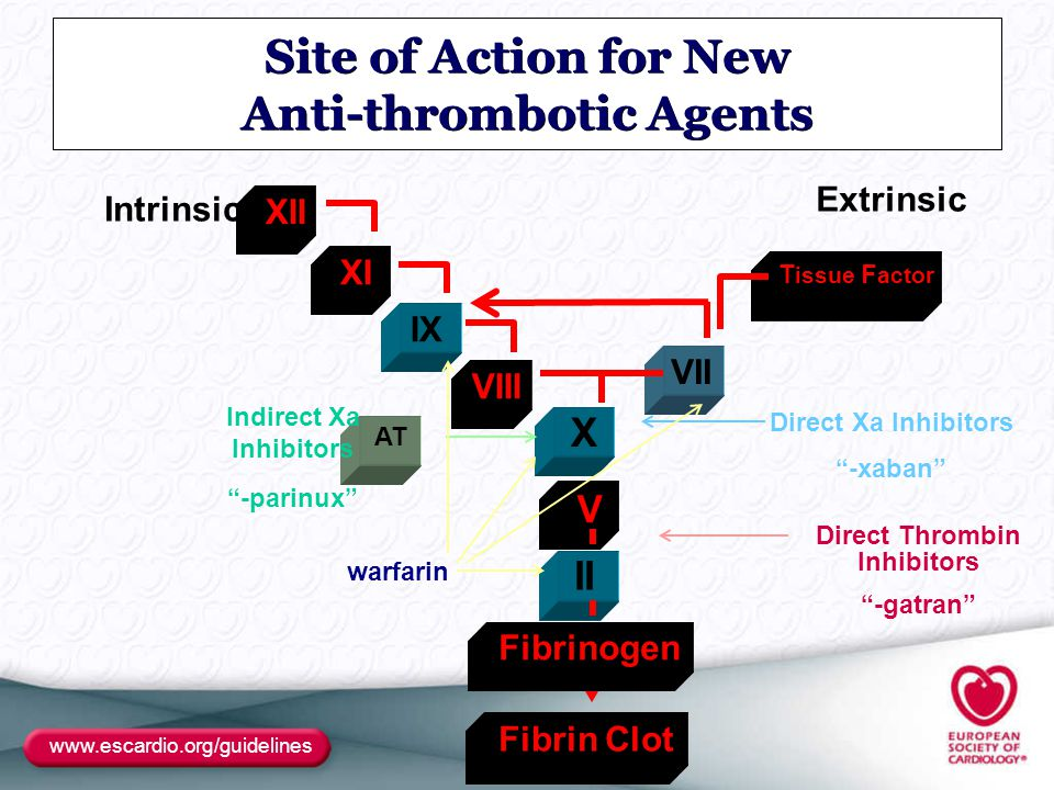 Site of Action for New Anti-thrombotic Agents