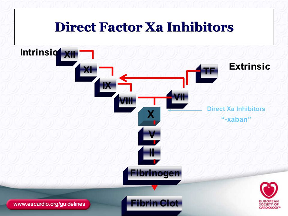 Direct Factor Xa Inhibitors