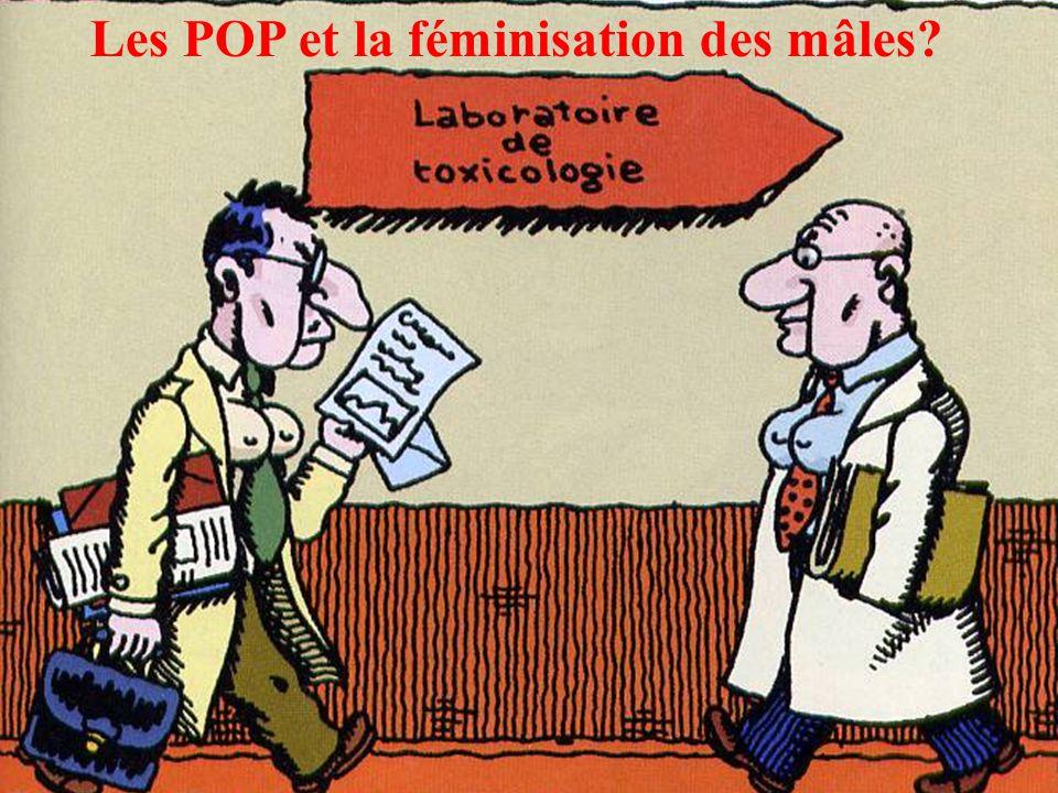 Les POP et la féminisation des mâles