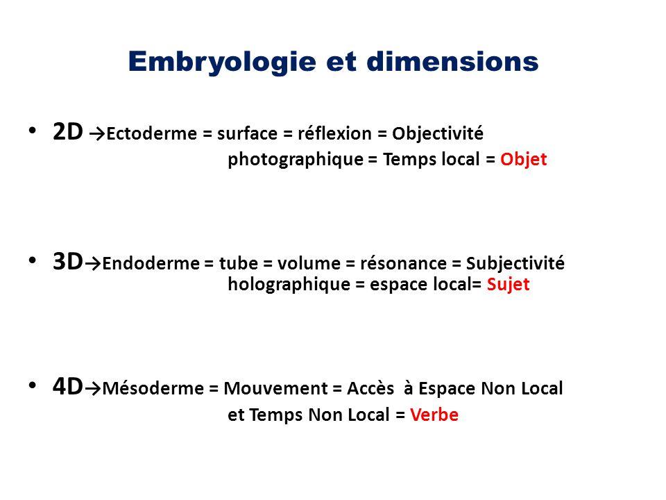 Embryologie et dimensions