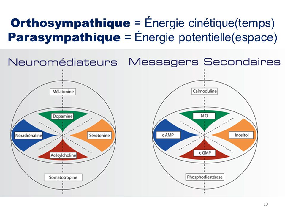 Orthosympathique = Énergie cinétique(temps) Parasympathique = Énergie potentielle(espace)