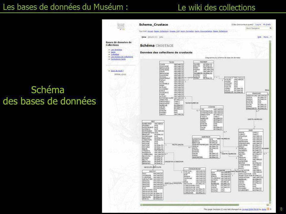 Schéma des bases de données Les bases de données du Muséum :