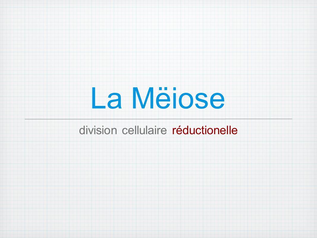 division cellulaire réductionelle