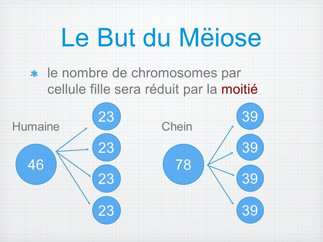Le But du Mëiose le nombre de chromosomes par cellule fille sera réduit par la moitié. 23. 39. Humaine.