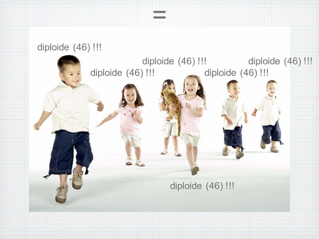 = diploide (46) !!! diploide (46) !!! diploide (46) !!!