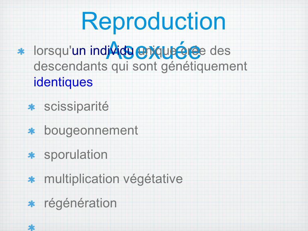 Reproduction Asexuée lorsqu un individu unique crée des descendants qui sont génétiquement identiques.