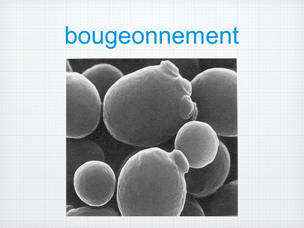bougeonnement