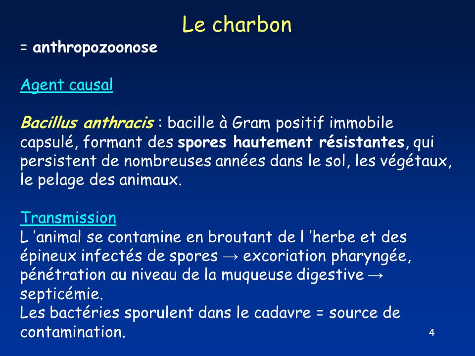 Le charbon = anthropozoonose Agent causal