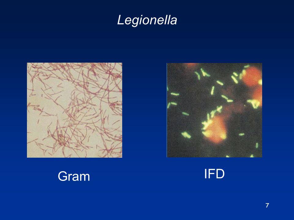 Legionella IFD Gram