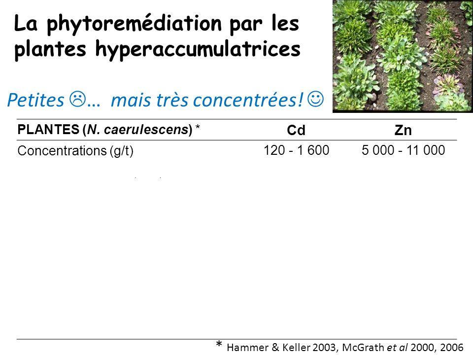 La phytoremédiation par les plantes hyperaccumulatrices