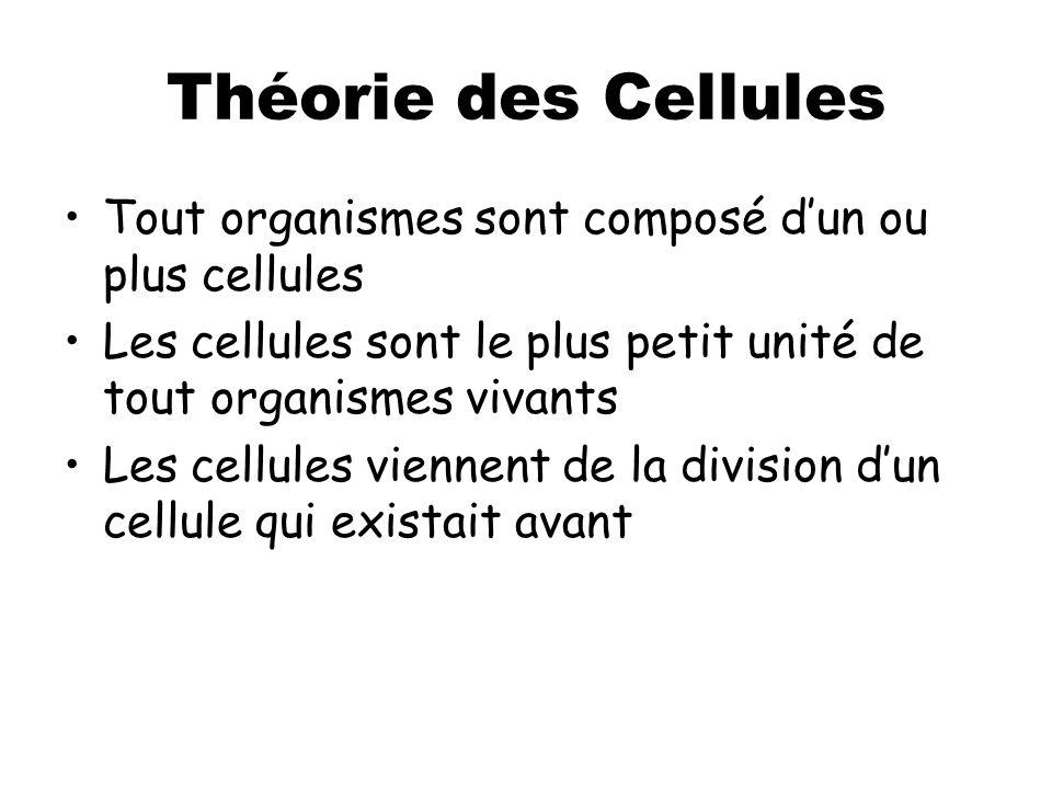 Théorie des Cellules Tout organismes sont composé d'un ou plus cellules. Les cellules sont le plus petit unité de tout organismes vivants.
