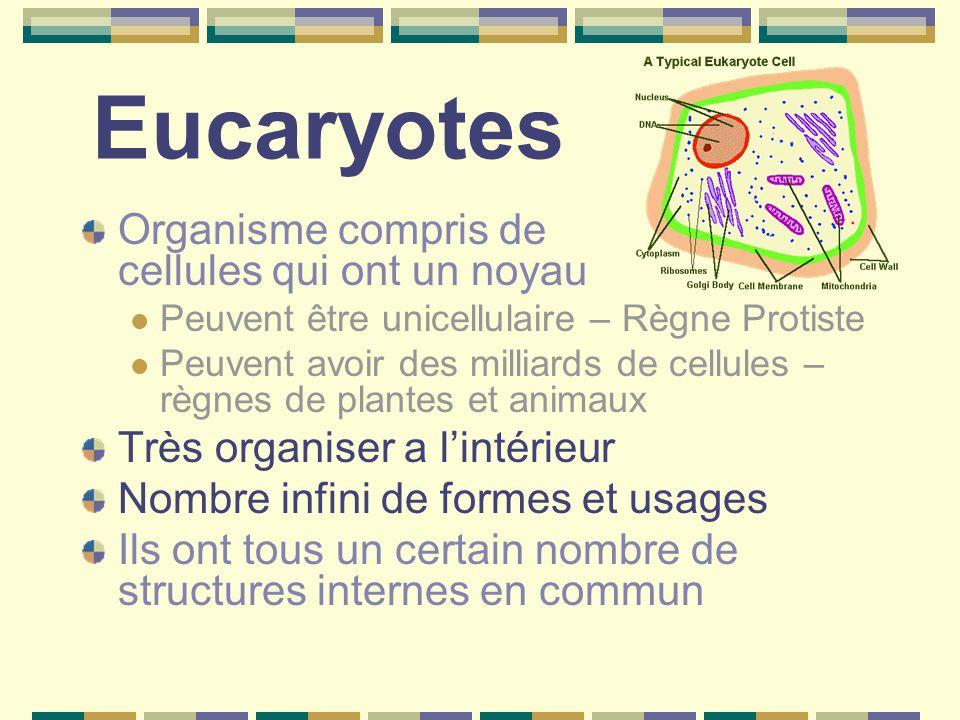 Eucaryotes Organisme compris de cellules qui ont un noyau