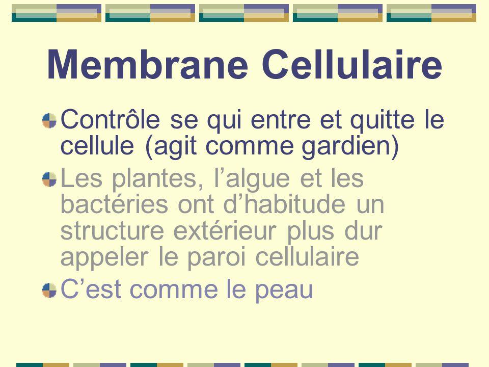 Membrane Cellulaire Contrôle se qui entre et quitte le cellule (agit comme gardien)