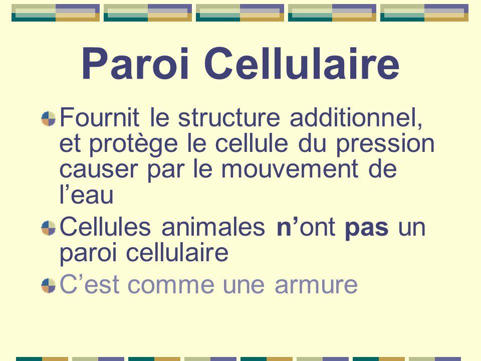 Paroi Cellulaire Fournit le structure additionnel, et protège le cellule du pression causer par le mouvement de l'eau.