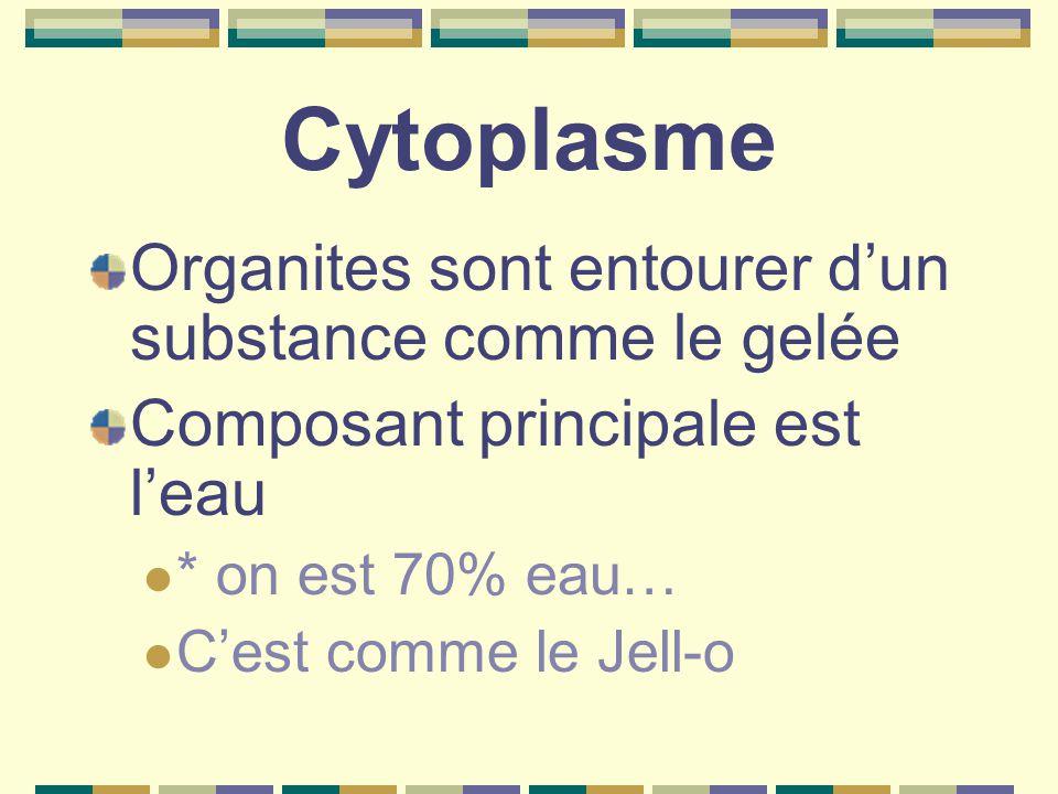 Cytoplasme Organites sont entourer d'un substance comme le gelée