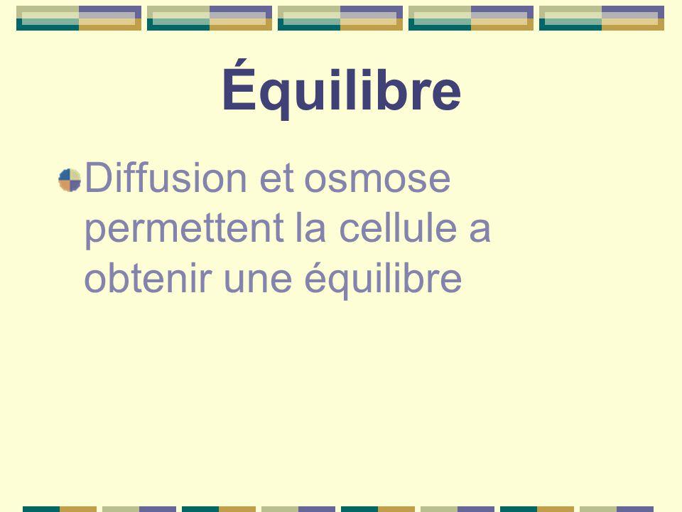 Équilibre Diffusion et osmose permettent la cellule a obtenir une équilibre